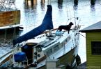 boat dog - CoffeeJitters.Net