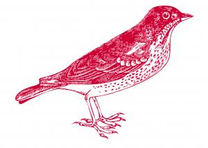 bird-3