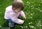 gem finds daisies