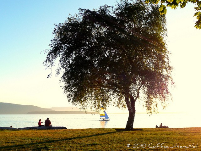 tree and sailboat at sunset on Bellingham Bay