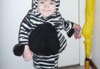 baby in ferocious zebra costume