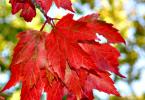 leaves change - CoffeeJitters.Net