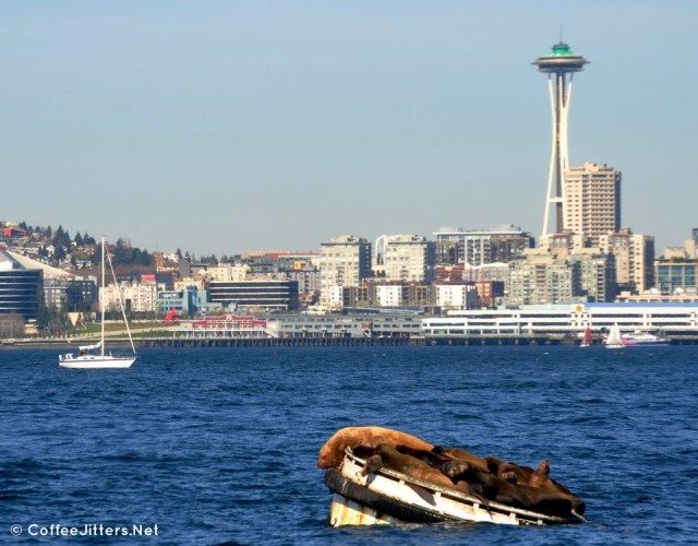 sea lions in seattle