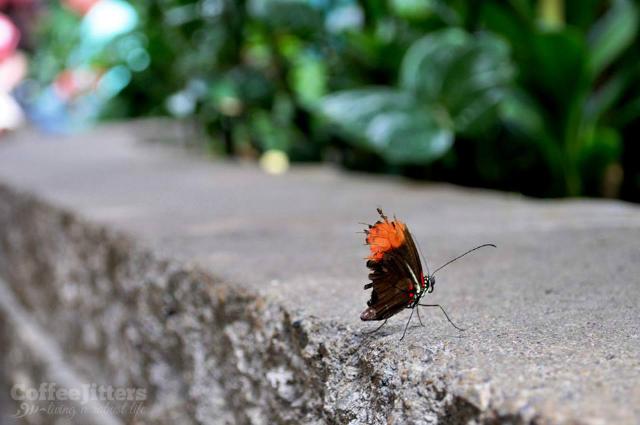 battered butterfly - CoffeeJitters.Net