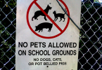 no pot bellied pigs