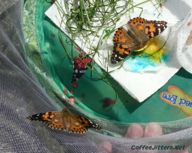 butterflies-in-tent