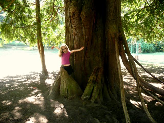 magical tree at Farrel-McWhirter Park